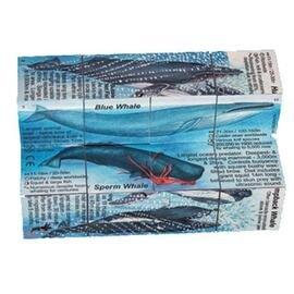 ZooBooKoo Cube Book | Dolphins & Whales